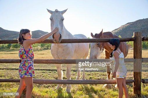 Girls petting horses : Stock Photo