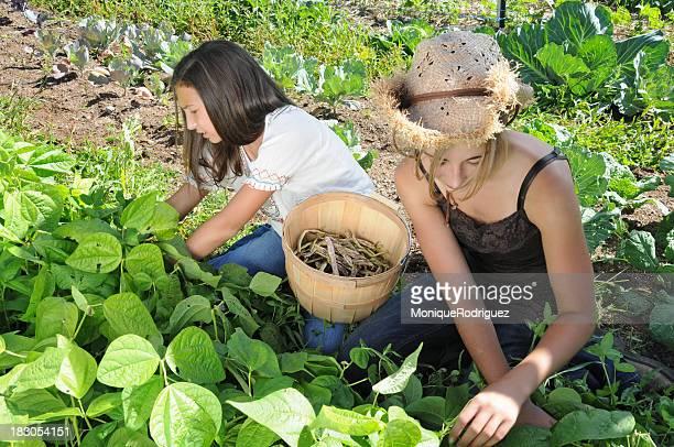 Girls Picking Beans in Garden