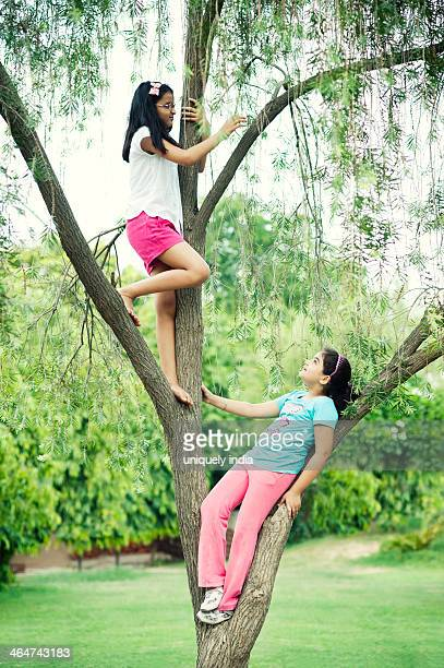 Girls playing on a tree in a park