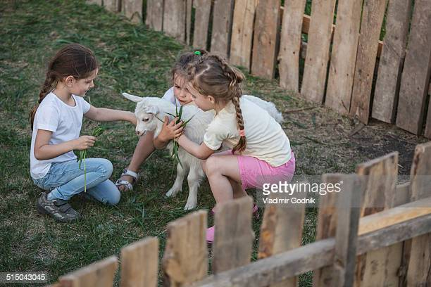 Girls playing with baby goat in park