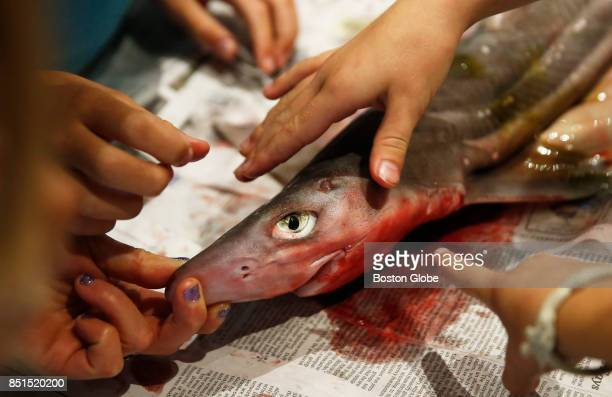 Girls reach out to touch a shark as they gather with female scientists to dissect a dogfish shark as part of 'Shark Tales Women Making Waves'...