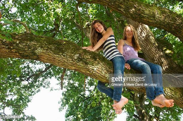 Ragazze seduto nell'albero insieme