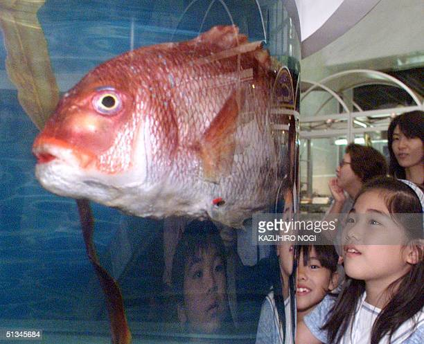 Girls watch a sea bream robot as it swims like a real fish developed by Japan's Mitsubishi Heavy Industries CO Ltd at its museum in Yokohama 23 May...
