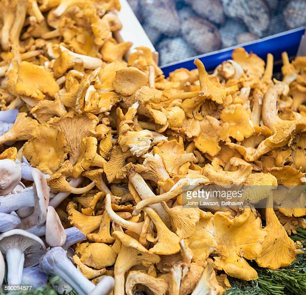 Girolle/Chantarelle mushrooms