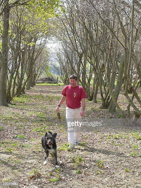 Truffle farmer Alan Hall walks with his dog Brock who is specially trained to sniff out truffles underground where they grow amongst the roots of...