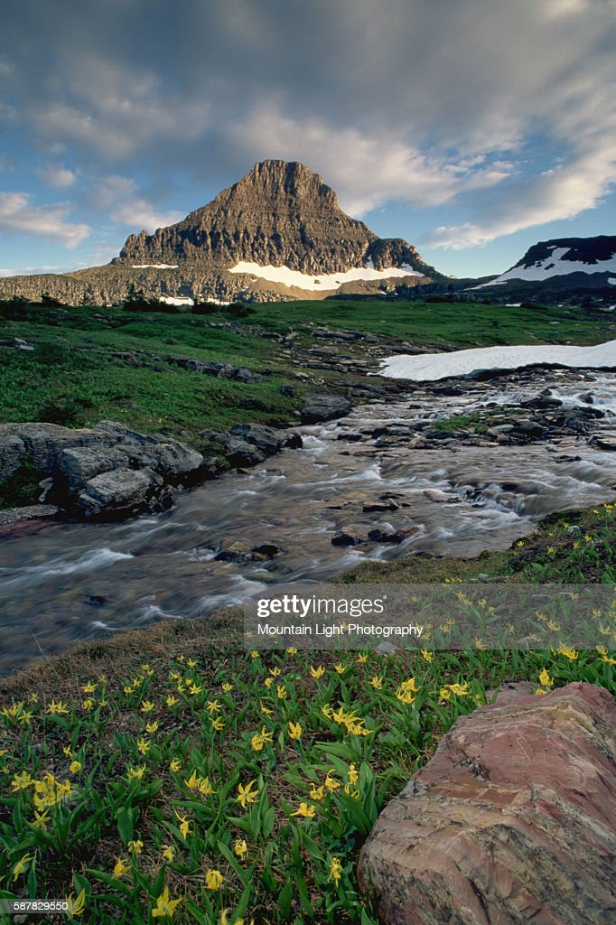 A glacial stream runs through a meadow in Logan Pass filled with spring wildflowers near Mount Reynolds in Montana's Glacier National Park
