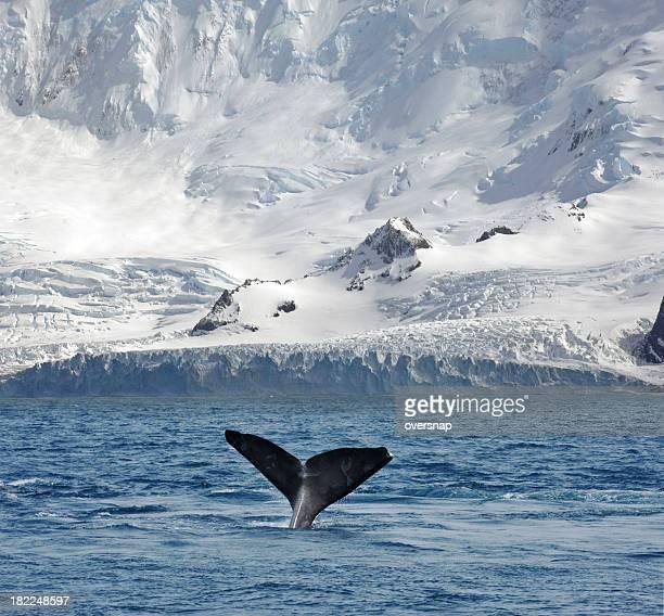 Gletscher und Walbeobachtung