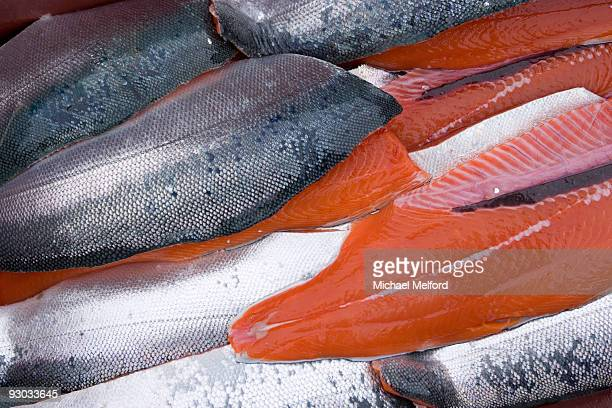 Silver Salmon caught in Glacier Bay, Gustavus, Alaska.