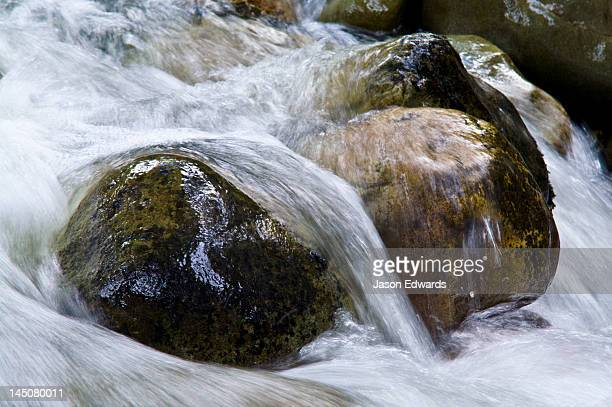 An alpine stream flows over boulders in a river bed in a beech forest.