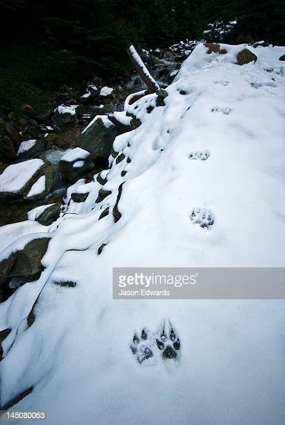 Dog footprints in the snow along the shore of an alpine stream.