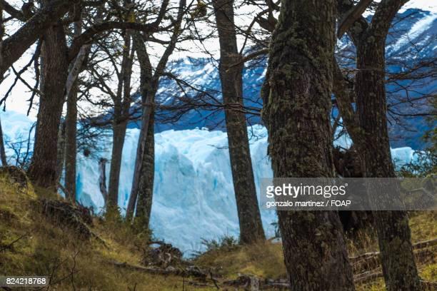 Glacier through the tree trunk