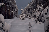 snow-covered lonely pine on the clearing in the night winter forest