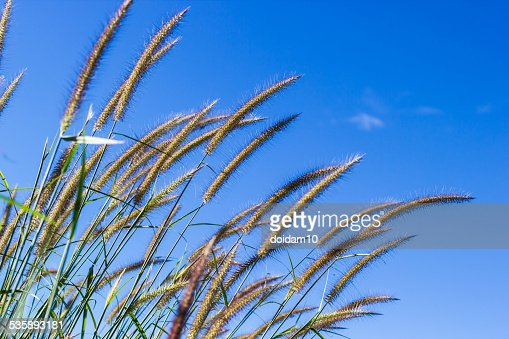 Glass blossom with blue sky : Stock Photo