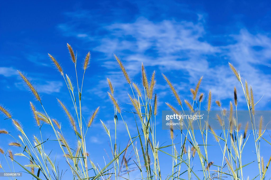 Glass blossom with blue sky : Stock Photo