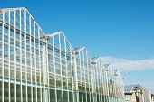 glass facade of greenhouse in garden against blue sky