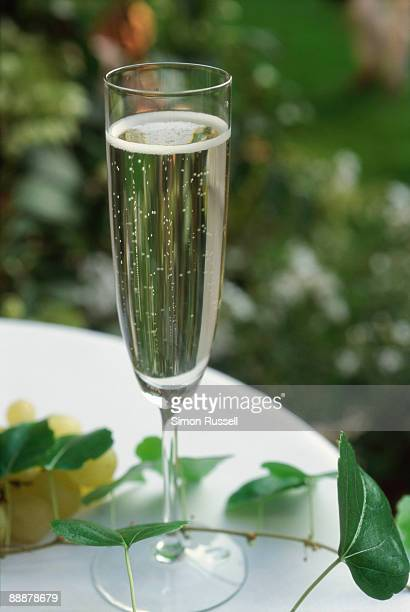 A glass of sparkling Prosecco wine