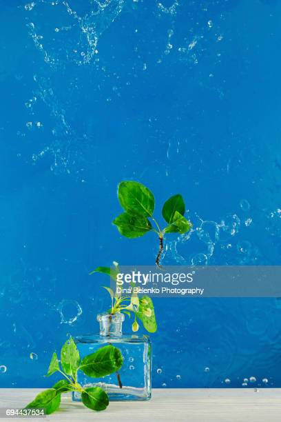 Glass vase with spring flowers in water splash