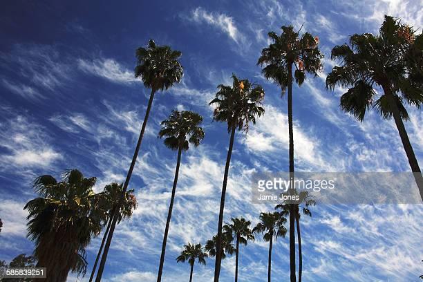 Glendale Skies