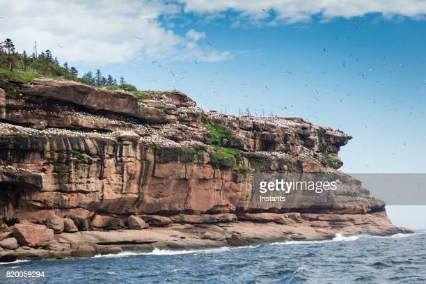 A glimpse at the beginning of Bonaventure Island's cliff where the world's largest colony of Northern gannets, over 200 thousand birds, call this place home, 6 months out of the year.