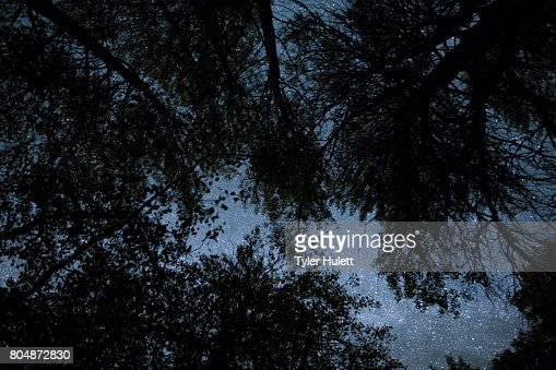 Glittering night sky through an Aspen Forest silhouette : Stock Photo