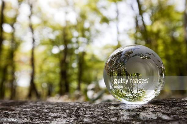 Globe en el bosque