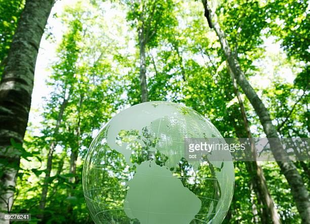 Globe in trees