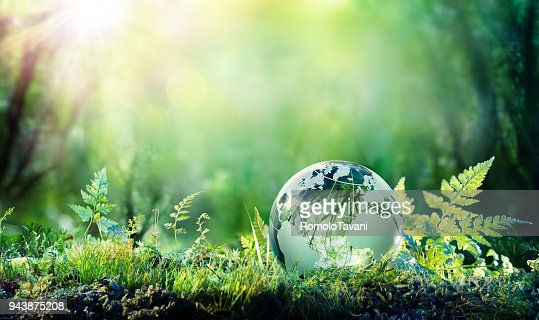Globe On Moss In Forest - Environment Concept : Stock Photo