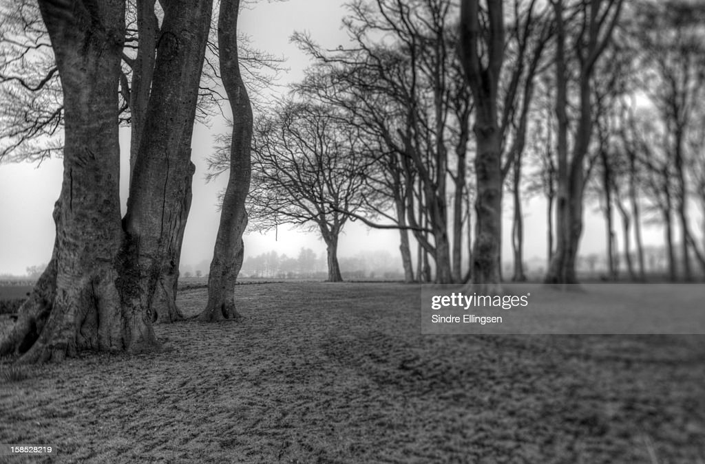Gloomy forest : Stock Photo