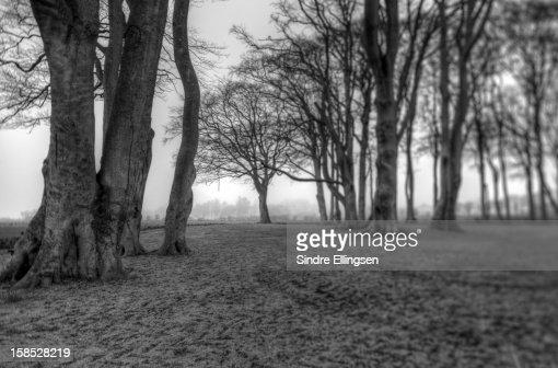Gloomy forest : Stock Photo