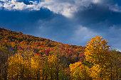 Glorious autumn mountainside