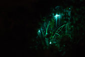 Taken in a glow worm cave in New Zealand. (Glow worms stay quite still for extended exposure shots!)