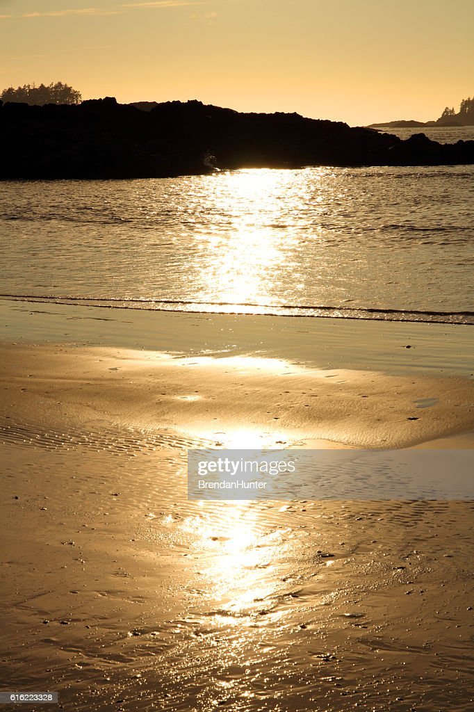 Glowing Gold of Tofino : Stockfoto