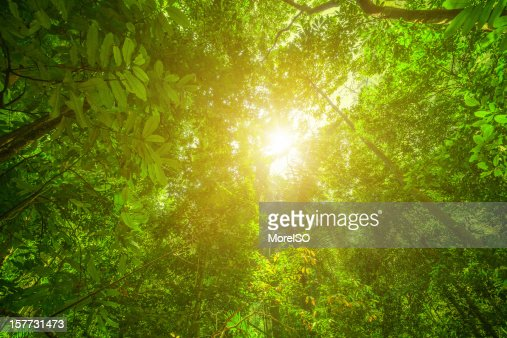 Glowing Green Rainforest
