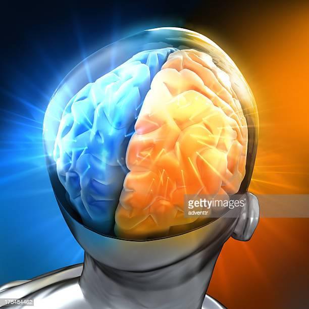 Rougeoyer cerveau humain