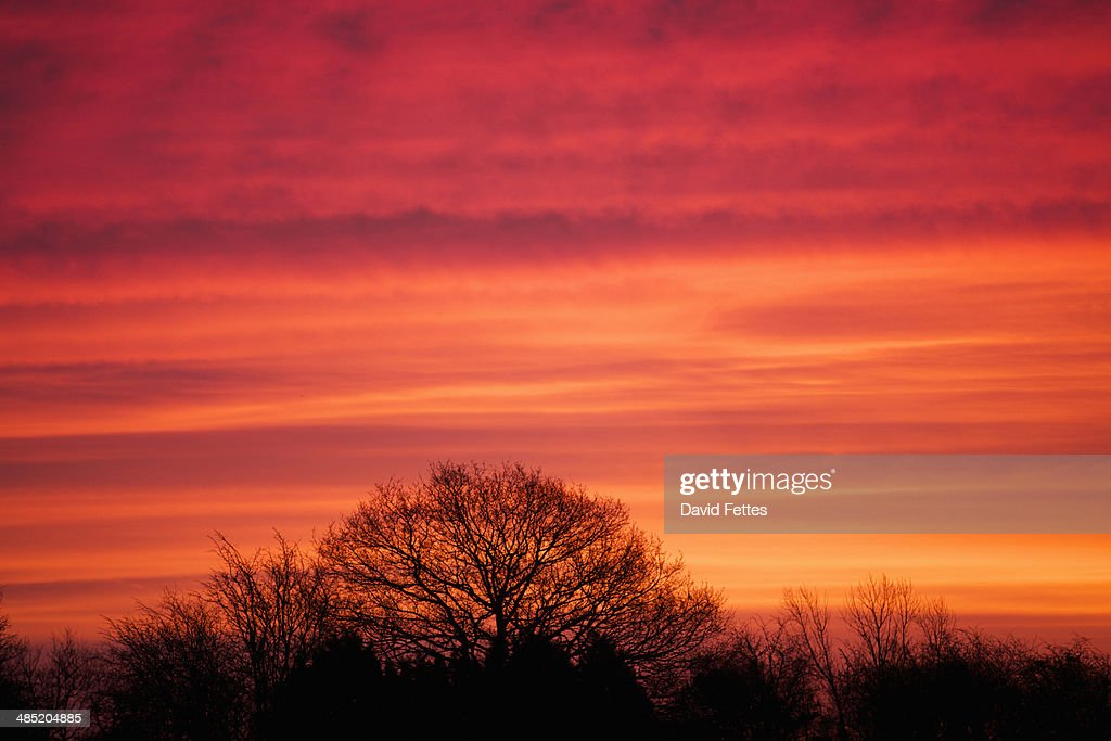 Glowing pink sunrise and silhouetted trees : Stock Photo