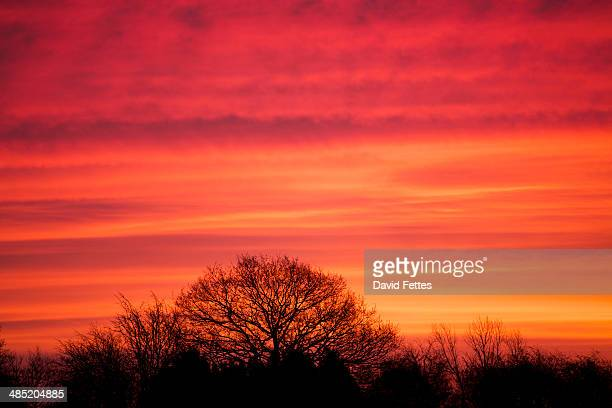 Glowing pink sunrise and silhouetted trees