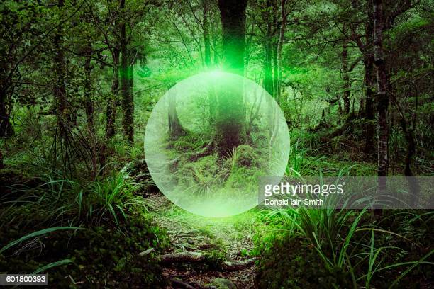 Glowing sphere floating in forest