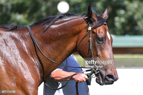 Go And Get Rich after winning United Commercial Projects BM58 Handicap at Mornington Racecourse on December 02 2016 in Mornington Australia