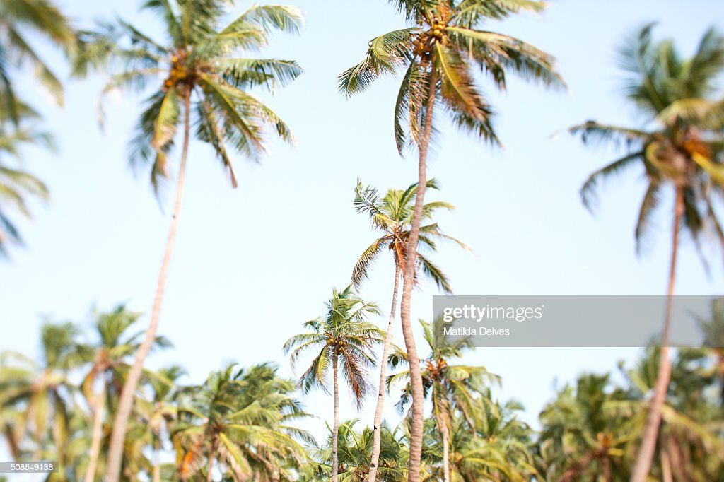 Goa, India : Stock Photo