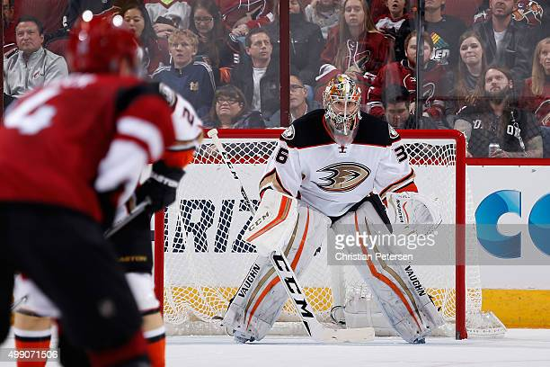 Goaltender John Gibson of the Anaheim Ducks in action during the NHL game against the Arizona Coyotes at Gila River Arena on November 25 2015 in...