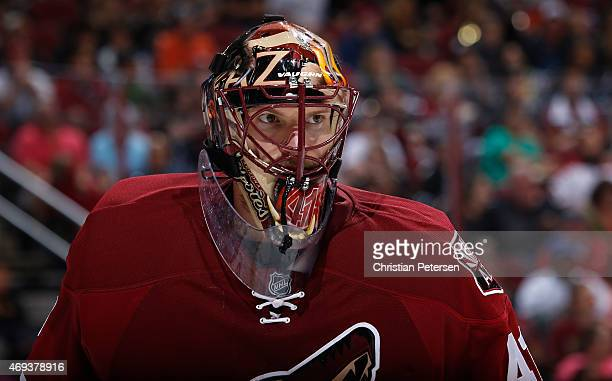 Goaltender Mike Smith of the Arizona Coyotes during the NHL game against the San Jose Sharks at Gila River Arena on April 4 2015 in Glendale Arizona...