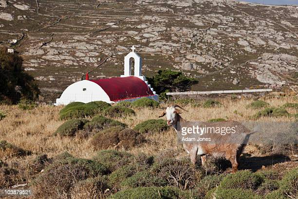 Goat and red domed church