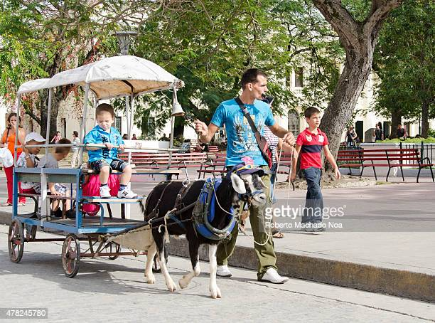 Goat drawn carriage a Santa Clara tradition Street entertainment for children carriage with a goat in Cuban city
