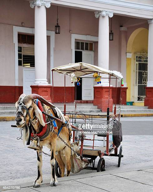 Goat drawn carriage used in the plaza of the city to circle kids around traditonal way of entertaiment for childhood