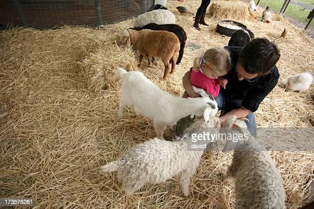 Goat-Fütterung