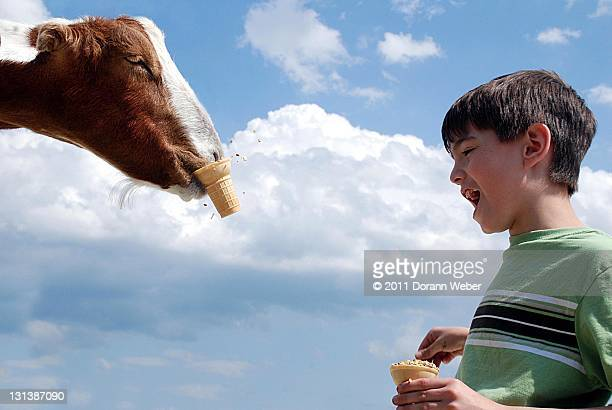 Goat Grabs ice cream cone from laughing boy