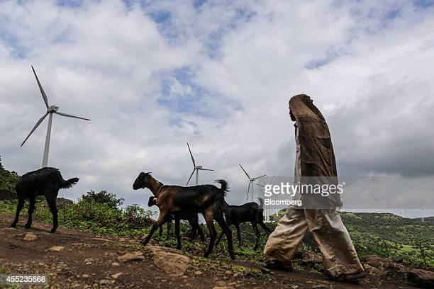 A goat herder walks his livestock past wind turbines manufactured by Gamesa Corp at the Bharat Light Power Ltd Amberi wind farms in Rewalkawadi...