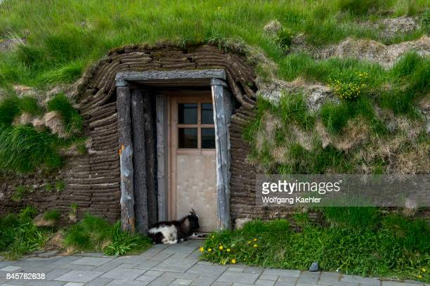 A goat is guarding the door to a turf house hosting a restaurant at Modrudalur the highest located farm in Iceland