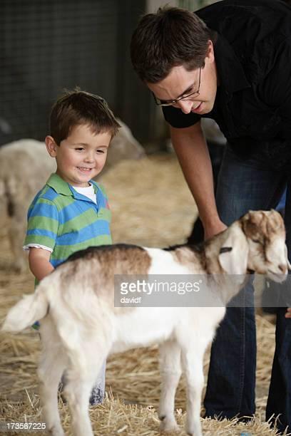 Ziege-Petting