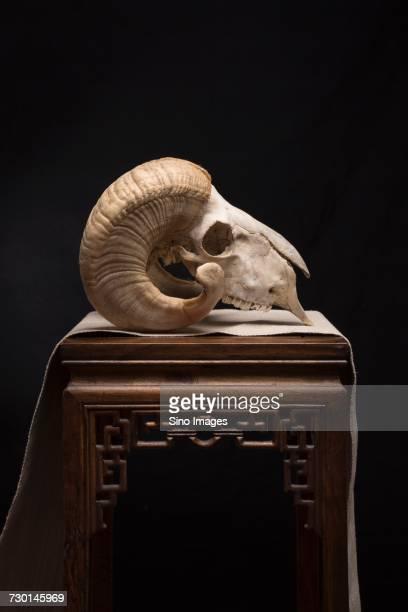 Goat skull on table against black background